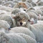 Wilk syty i owca cała