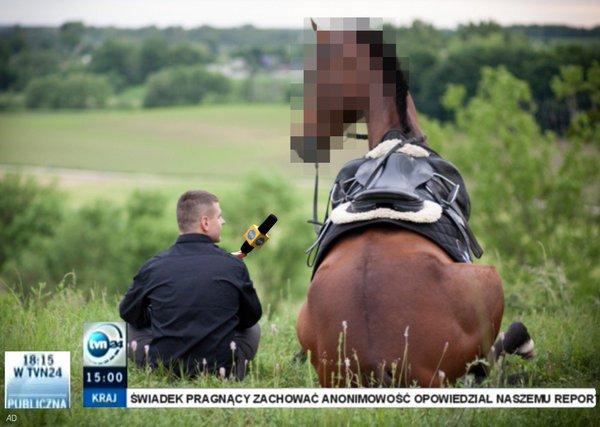 Wywiad z koniem