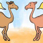 Dromader i Wielbłąd